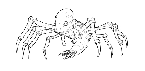 arachnofetus